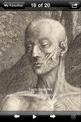 sc_3_anatomy_drawing