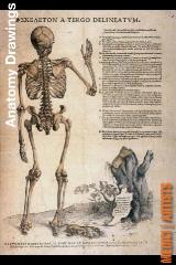sc_4_anatomy_drawing
