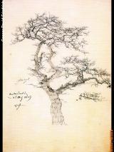 sc_2_friedrich_drawing